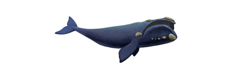 The Right Whale, state marine mammal of Massachusetts