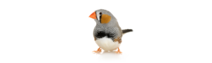 Finch, the state bird of New Hampshire
